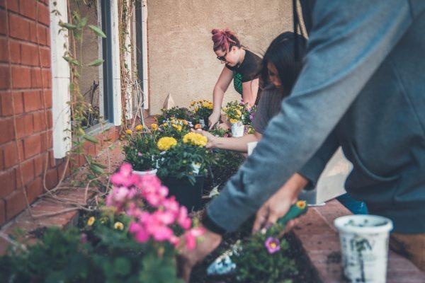 Gardens and green space: a hidden social divide?